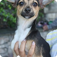 Adopt A Pet :: Peanut - Washington, DC