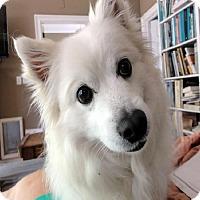 Adopt A Pet :: Jacques of Tallahassee, FL - Bradenton, FL