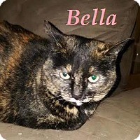 Adopt A Pet :: Bella - Super Friendly! - Huntsville, ON