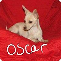 Adopt A Pet :: Oscar - Niagra Falls, NY