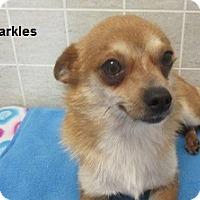 Adopt A Pet :: Sparkles - Bartonsville, PA
