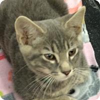 Adopt A Pet :: Yogi - Warrenton, MO