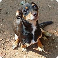 Adopt A Pet :: Roger - Lawrenceville, GA