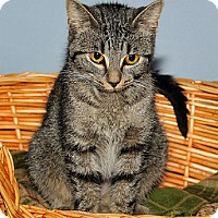 Adopt A Pet :: Candace - Gatineau, QC