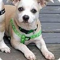Adopt A Pet :: Jack - Grafton, WI