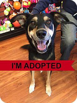 German Shepherd Dog/Border Collie Mix Dog for adoption in Regina, Saskatchewan - Bon Bon