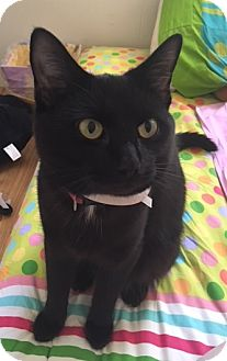 Domestic Shorthair Cat for adoption in Harrisonburg, Virginia - Toothless