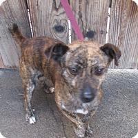 Adopt A Pet :: Jack - Lomita, CA