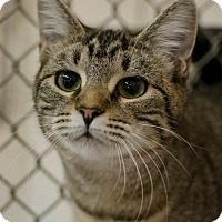 Adopt A Pet :: Pilgrim - Greenwood, SC