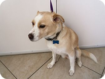 Fox Terrier (Smooth) Mix Dog for adoption in Corona del mar, California - Sandy