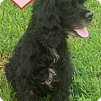 Adopt A Pet :: Lena - MAIDEN, NC