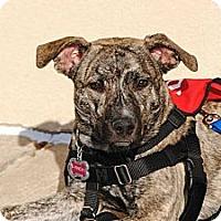 Adopt A Pet :: Finch - Shrewsbury, NJ