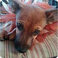 Adopt A Pet :: Peanut - Bakersfield, CA