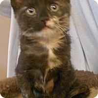 Adopt A Pet :: Eve - Reston, VA