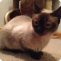 Adopt A Pet :: Toffee - East Hanover, NJ
