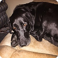 Adopt A Pet :: Arthur - Grafton, MA