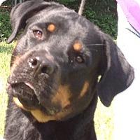 Adopt A Pet :: Lexi - Alachua, GA