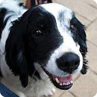Adopt A Pet :: Barney - Minneapolis, MN