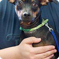 Adopt A Pet :: Cain - Homewood, AL
