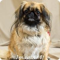 Adopt A Pet :: Addie - Oklahoma City, OK