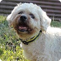 Adopt A Pet :: Spike - Joplin, MO