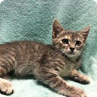 Adopt A Pet :: Katie - Watkinsville, GA