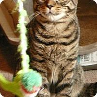 Adopt A Pet :: Oliver - Raritan, NJ