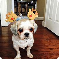 Adopt A Pet :: Milo - Windermere, FL