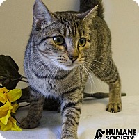 Adopt A Pet :: APRIL - Sandusky, OH
