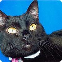 Adopt A Pet :: Mariah - Sherwood, OR