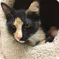 Adopt A Pet :: Paula - Medina, OH