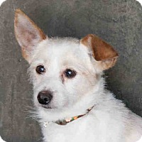 Adopt A Pet :: Luca - Los Angeles, CA