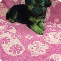 Adopt A Pet :: Jewels - New Oxford, PA