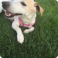 Adopt A Pet :: Jack - Worcester, MA