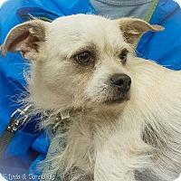 Adopt A Pet :: Zeek - Loudonville, NY