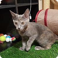 Adopt A Pet :: Emee - Yuma, AZ