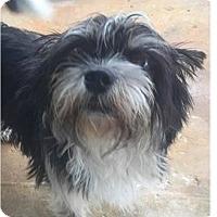 Adopt A Pet :: Chloe - Springdale, AR