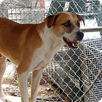 Adopt A Pet :: Colby - Henderson, NC