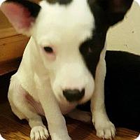 Adopt A Pet :: Diamonds - Racine, WI