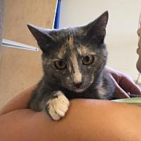 Adopt A Pet :: Scarlett - Baton Rouge, LA