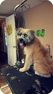 Terrier (Unknown Type, Medium) Mix Dog for adoption in Russellville, Kentucky - Bruno