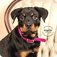 Adopt A Pet :: Nova - Cincinnati, OH