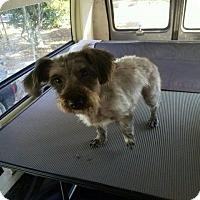 Adopt A Pet :: MONET - Hampton, VA