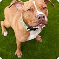 Adopt A Pet :: Raspberry - Villa Park, IL