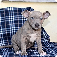 Adopt A Pet :: Drifter - Los Angeles, CA