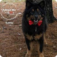 Adopt A Pet :: Bubbles - New Milford, CT