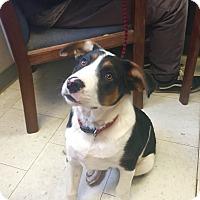 Adopt A Pet :: Dash - Visalia, CA