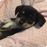 Adopt A Pet :: Truffles - Brea, CA