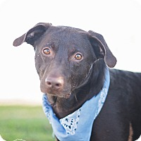 Adopt A Pet :: Simon - Kingwood, TX