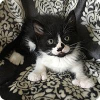 Adopt A Pet :: Kanga - Tampa, FL